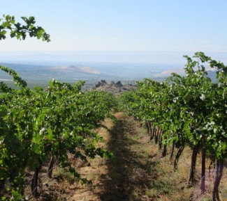 Partner Vineyards