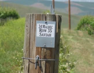 Seven Hills Vineyard 1